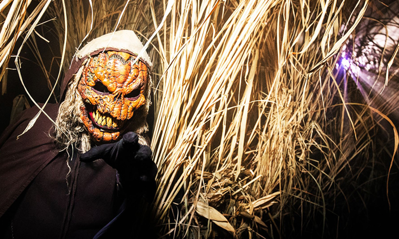 Busreis Halloween Fright Nights