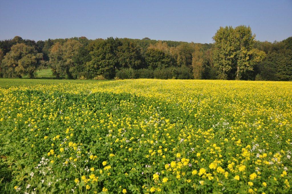 Ardennen wandelreis met Veenstra Reizen