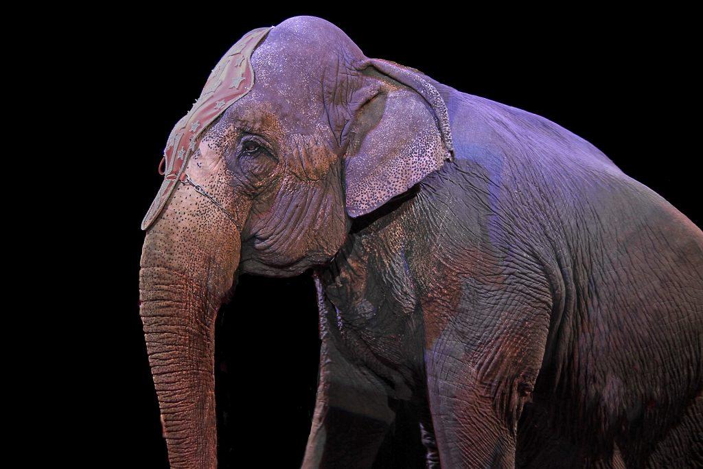 Personeelsuitje wereldkerstcircus een olifant