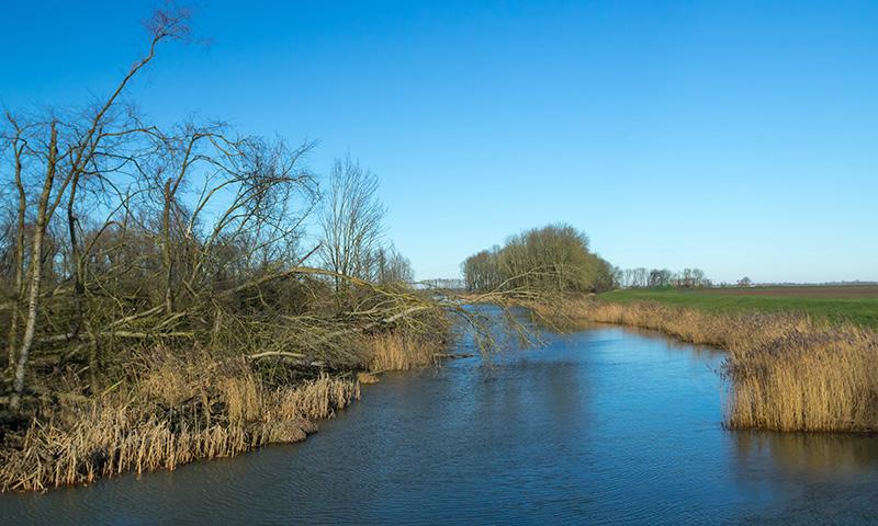 Dagtocht rondvaart Biesbosch