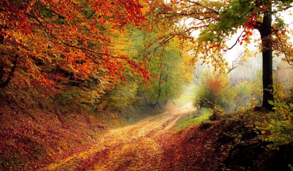 Dagtocht Herfst in Salland afbeelding 3