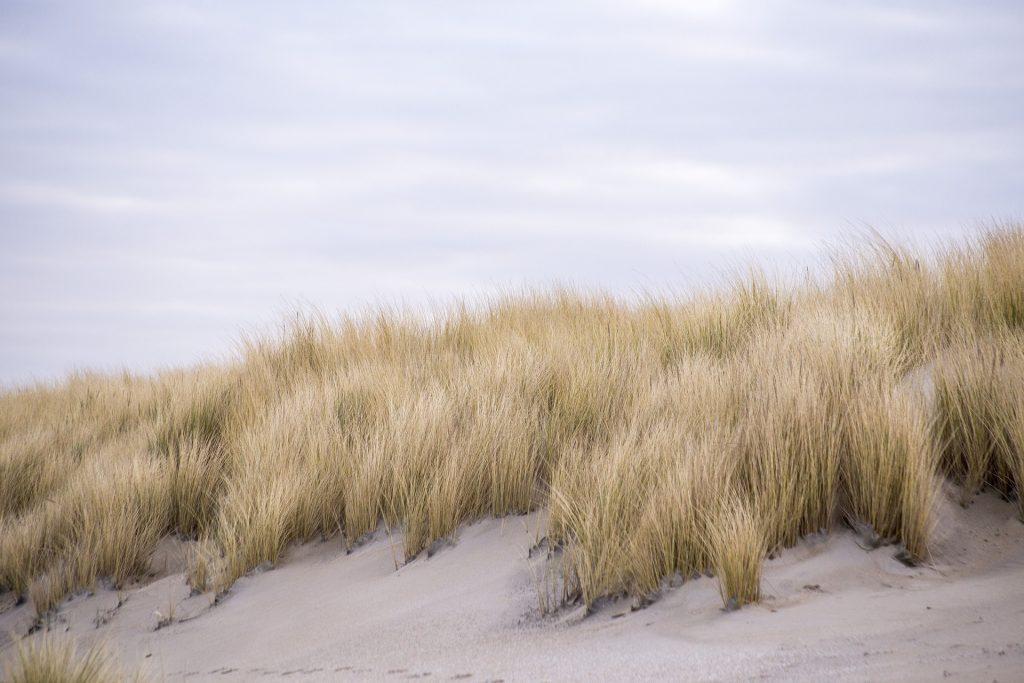 Nederlands landschap met duinen